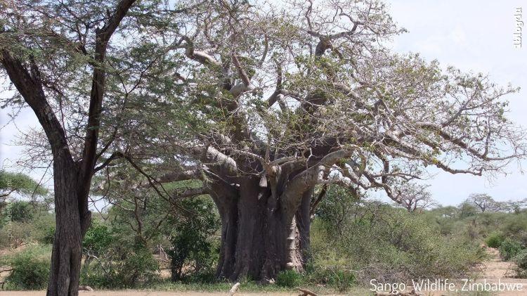 SANGO Wildlife Lodge - Zimbabwe